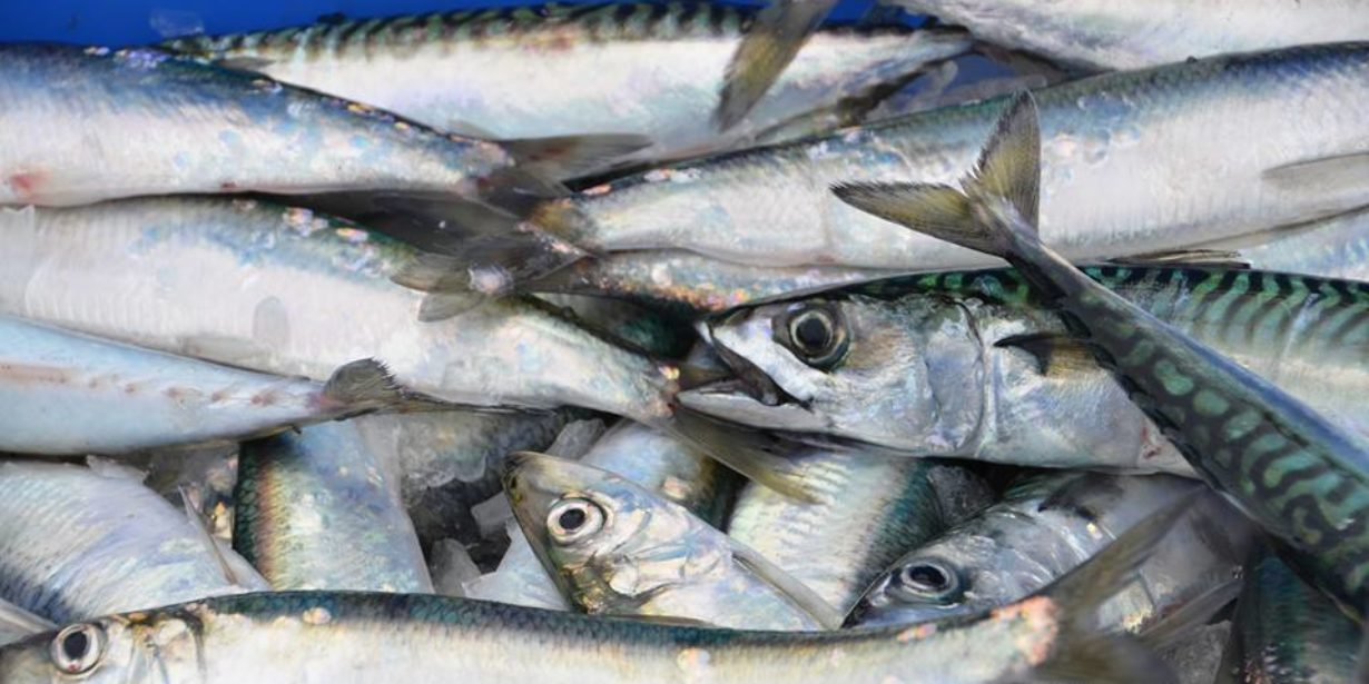 Post thumbnail for From Sea to Table: Faircatch Launch London's First Community Fish Box Scheme