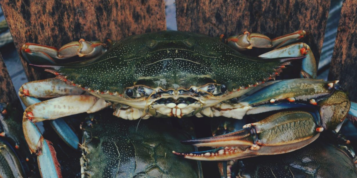 Post thumbnail for What Does Sustainable Seafood Certification Mean?