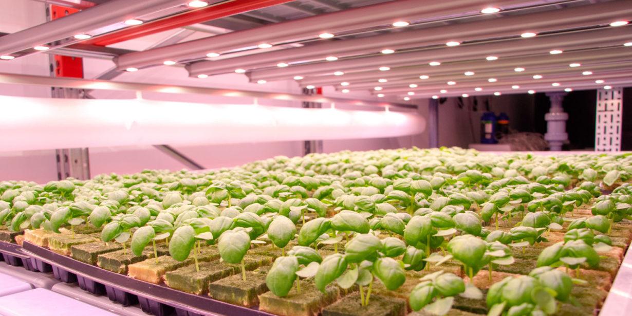 Post thumbnail for Vertical Farming and Fish Make Great Salad Greens