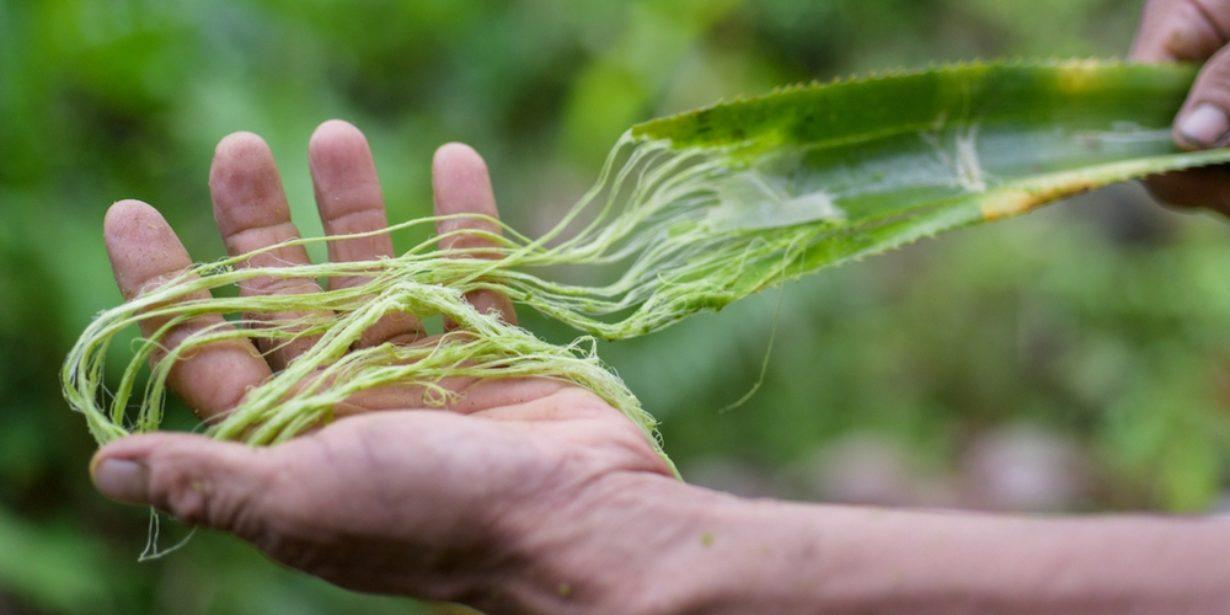 circular economy food initiatives