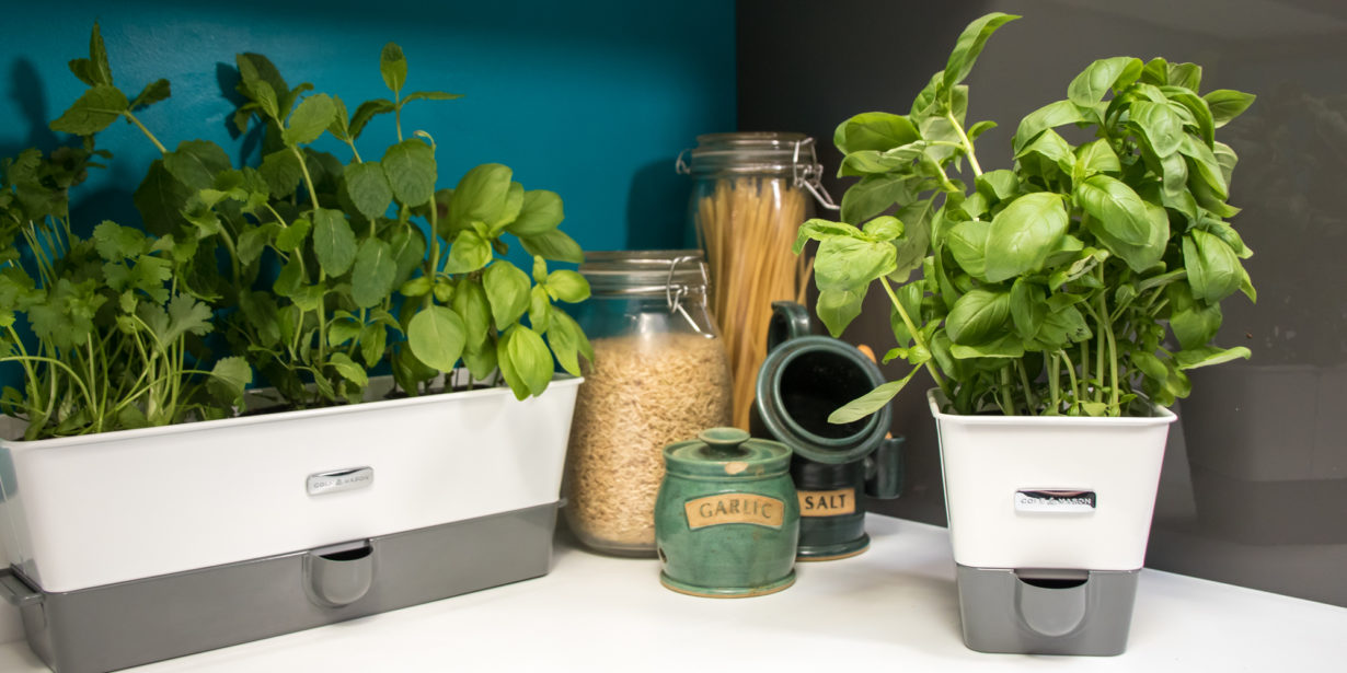 keeping herbs fresh