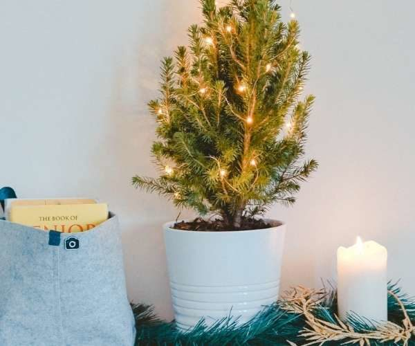 Reusable, Sustainable and Eco-Friendly Christmas Tree Options