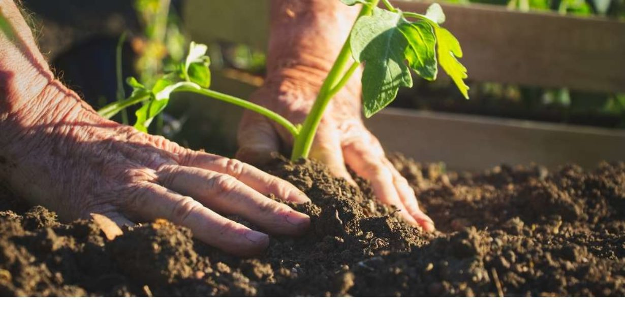Post thumbnail for The Best Gifts for Green Fingered Gardeners
