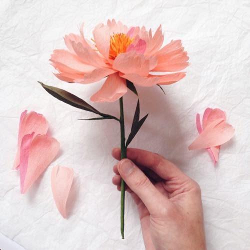 A Petal Unfold's Paper Flowers