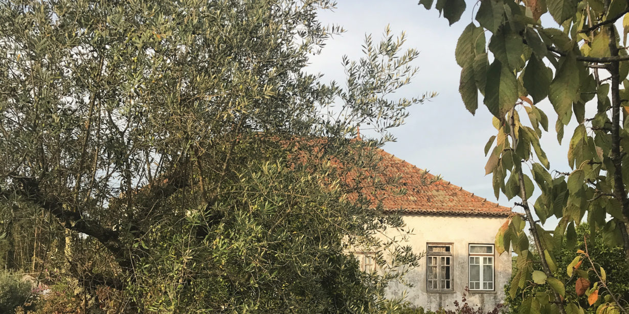 Post thumbnail for Buying Property in Portugal – How We Found Our Dream Farm (and How Much It Cost!)